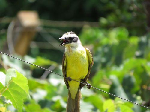 i saw you bird nature