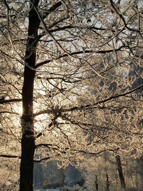 ice snow crystals frozen