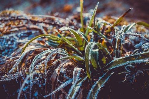 ice  eiskristalle  winter