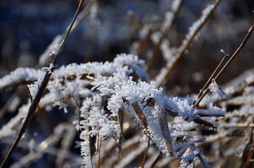 ice  eiskristalle  ripe