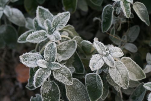 ice flower silver