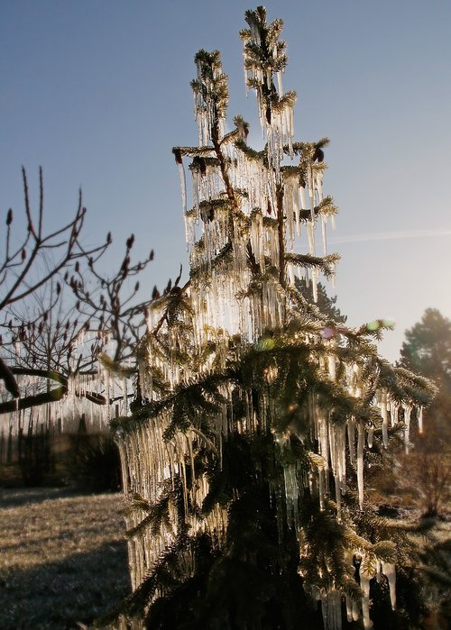 ice  frost  nature