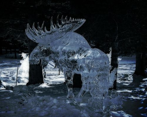ice moose carving