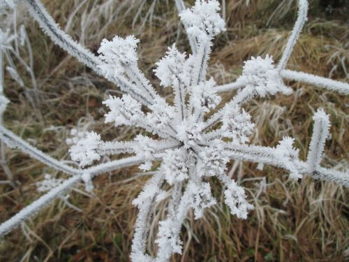 ice flowers eiskristalle cold