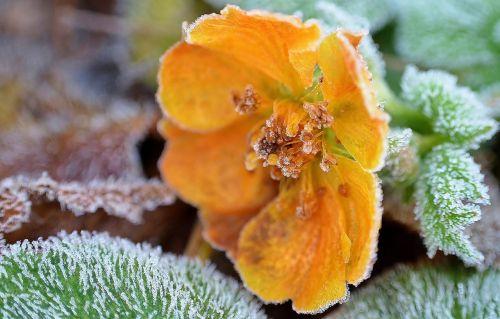 ice flowers crystals eiskristalle