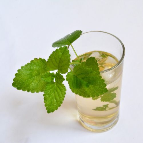 ice tea melissa officinalis lemon balm