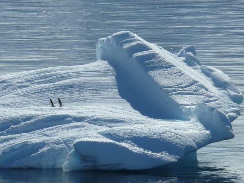 iceberg ice floe antarctica