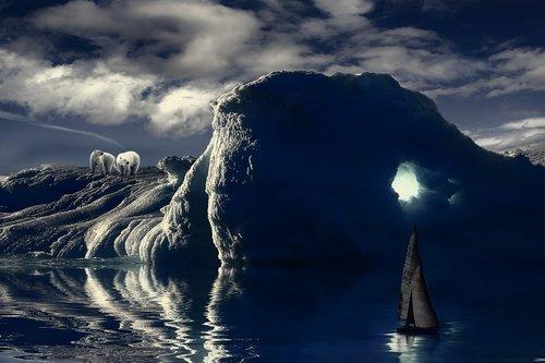 iceberg  polar bear  bear