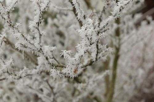 iced eiskristalle winter