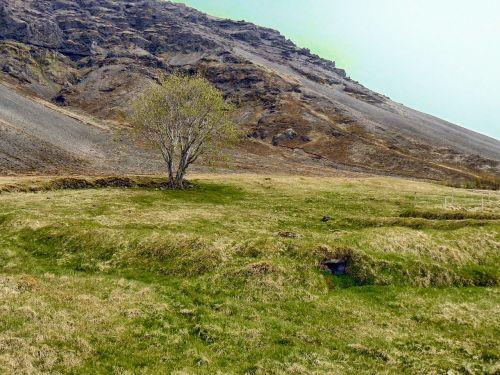 iceland,kraštovaizdis,kalnas,dangus,žolė,medis,gamta,lauke,Šalis,kaimas