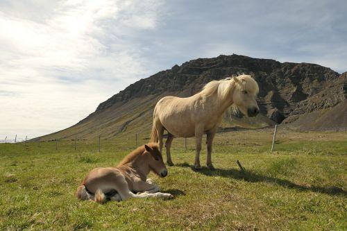 iceland,arklys,ganykla