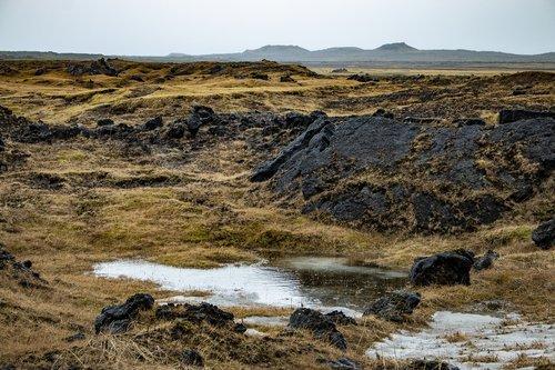 iceland  moss  nature