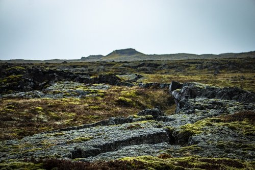 iceland  moss  green