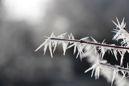 icicle frost winter