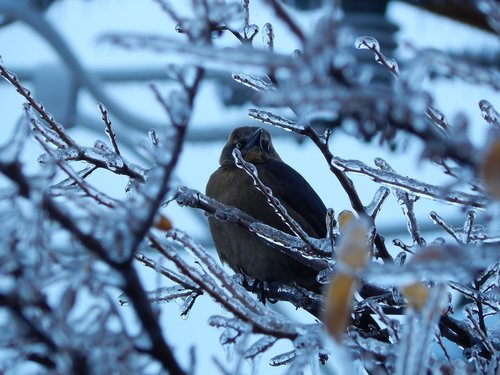 icy branches  bird  winter