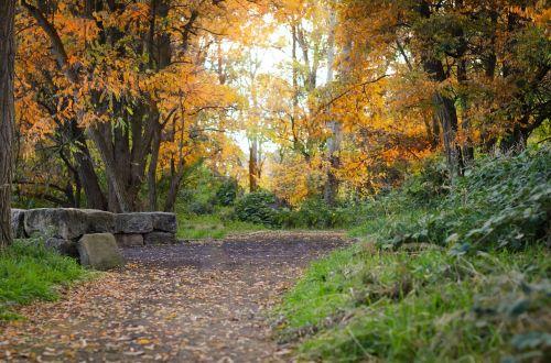 idaho path fall