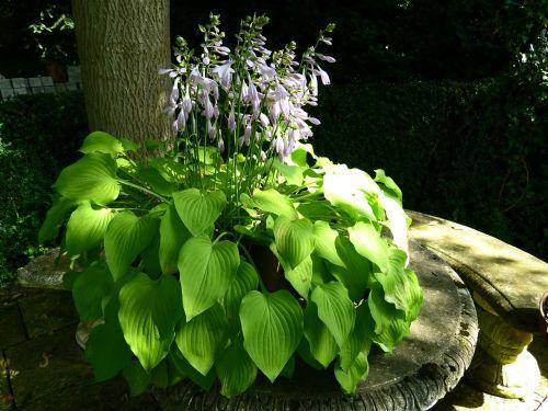 idyll garden bench plant