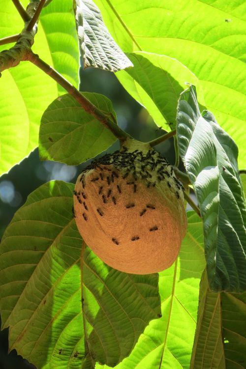 iguazu nature wasps