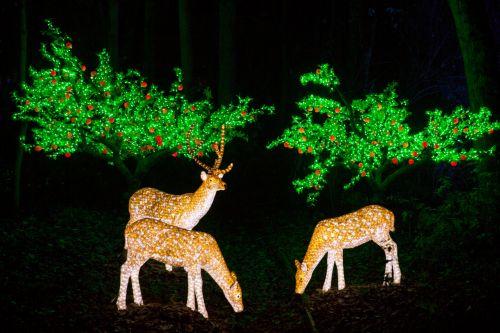 Illuminated Deer