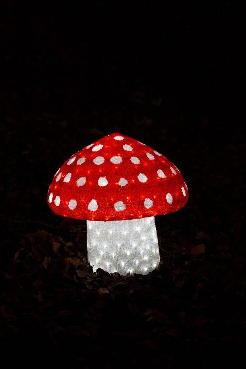 Illuminated Mushroom