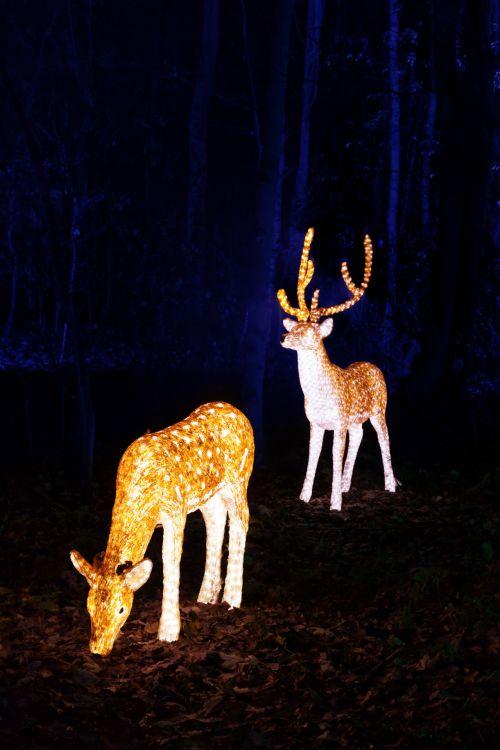 Illuminated Reindeer
