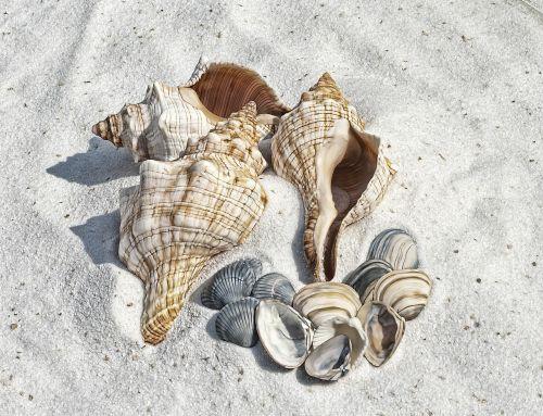 illustration shell shells