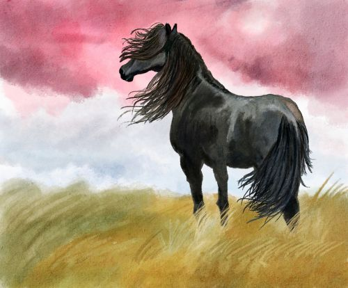 illustration horse meadow