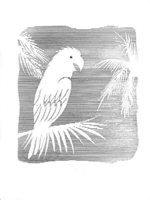 illustration black and white ink