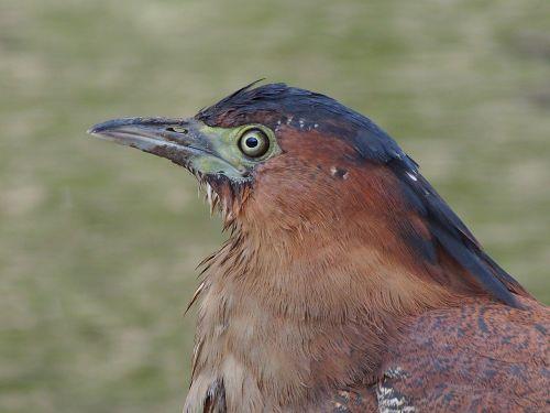鷺 waterfowl meditation