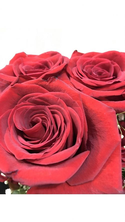 imported red roses love feast