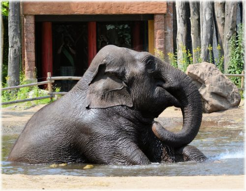 In The Bath Tub With The Elephants 04