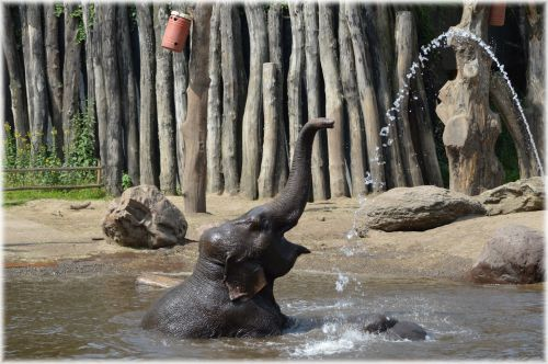 In The Bath Tub With The Elephants 14