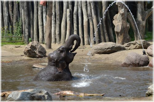 In The Bath Tub With The Elephants 15