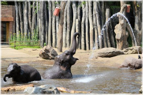 In The Bath Tub With The Elephants 17