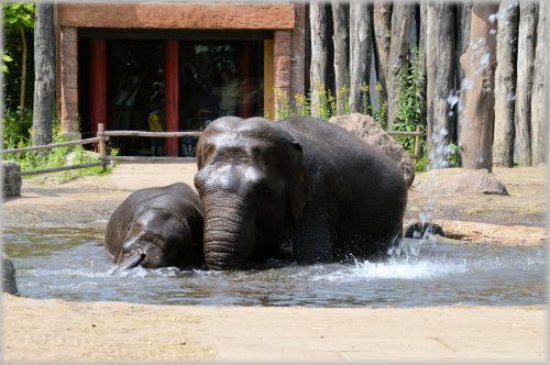 In The Bath Tub With The Elephants 2.2