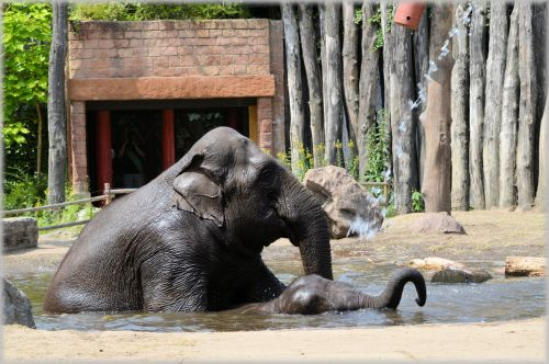 In The Bath Tub With The Elephants 2.4