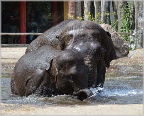 In The Bath Tub With The Elephants 2.7