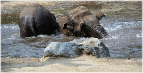 In The Bath Tub With The Elephants 2.9