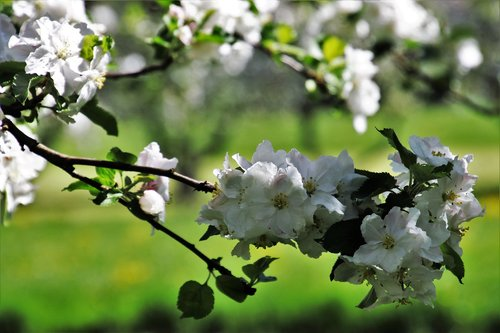 in the garden  spring  flower