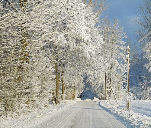 in winter forest snow snow load