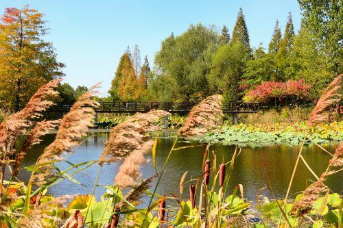 incheon dream park chrysanthemum festival
