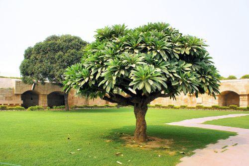 india tomb tree