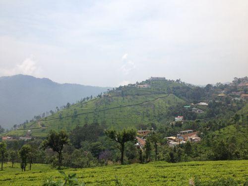 india ooty tea plantations