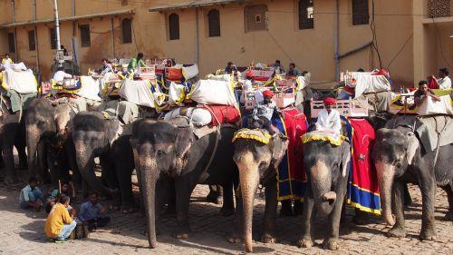 india jaipur fort elephants