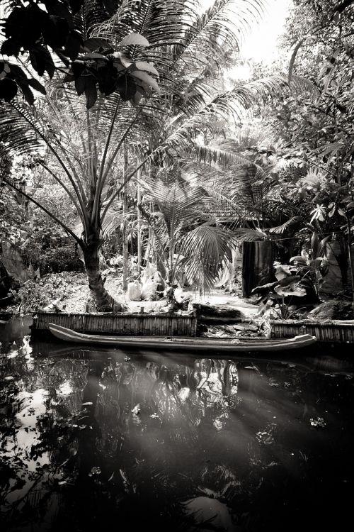 india kerala palm trees