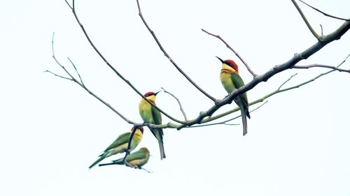 india  kerala  bird