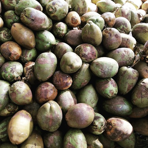 india  coconut  coco