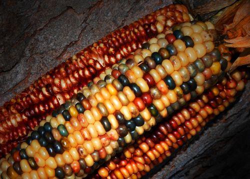 indian corn decorate