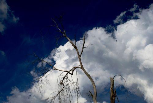 Indigo Sky And White Cloud