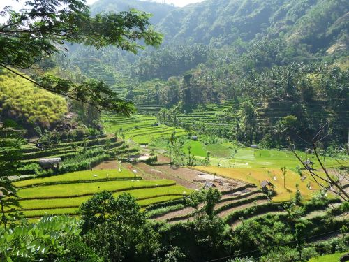indonesia rice hill